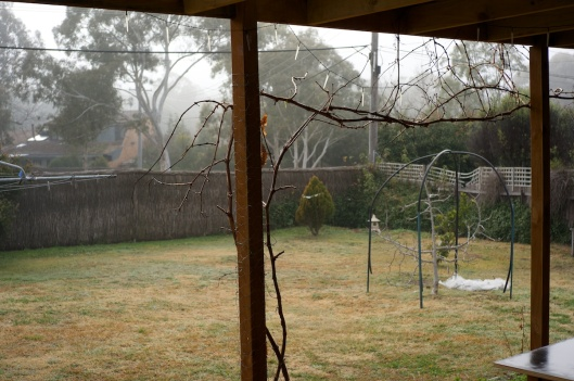 Mist out on the back yard
